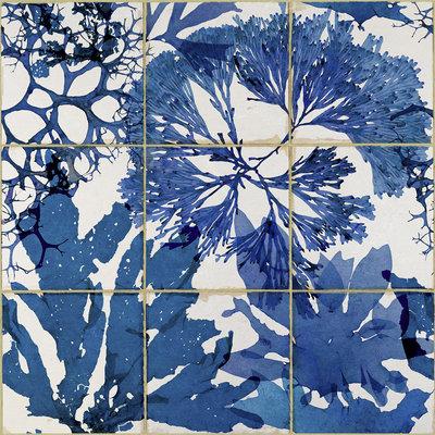 Algae in Blauw