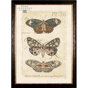 serie vlinders in lijst