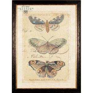 Serie 'Vlinders in lijst' 3